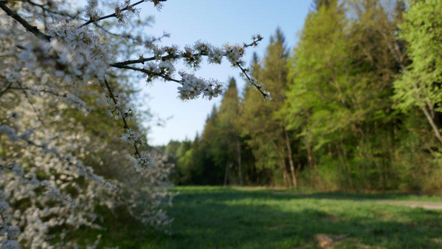Herzog-Jäger-Pfad: Weg über Lichtung